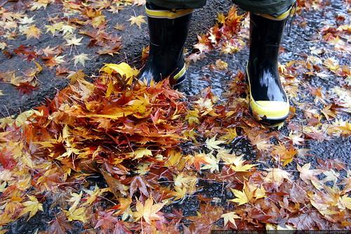 rain boots & autumn leaves    MG 4509