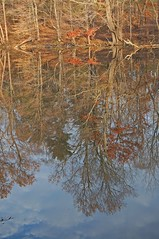 reflections on Speedwell Park Lake 2