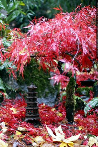 little pagoda under a little japanese maple tree    MG 4787