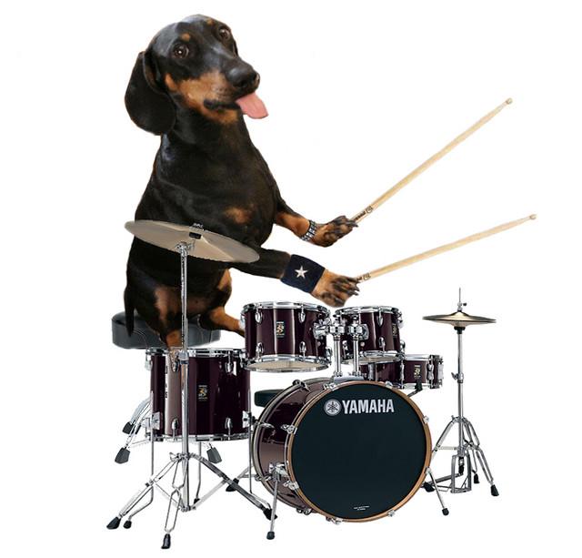 Black Dog  Drum