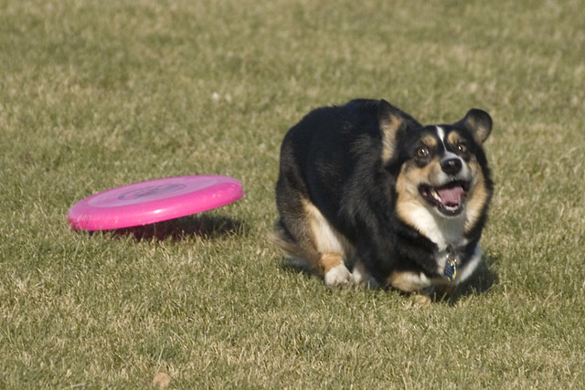 I love playing Frisbee!!