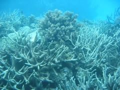 coral reef fish(0.0), invertebrate(0.0), shoal(0.0), coral reef(1.0), coral(1.0), sea(1.0), ocean(1.0), marine biology(1.0), stony coral(1.0), underwater(1.0), reef(1.0),