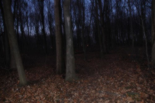 longexposure trees ontario canada night forest kent bush woods nikon geocaching d70s trail chatham geocache orton paxton paxtonbush ©gregorypleau