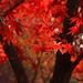 Autumn by *suika *