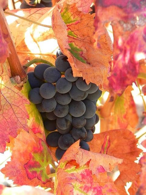 Осенние плоды. Фотограф: Tintilla.