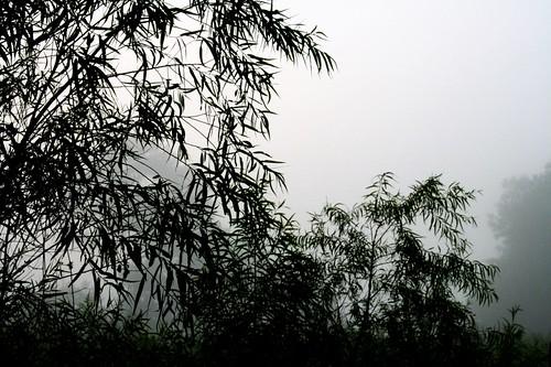 morning trees nature fog landscape ilovenature louisiana thesouth foggymorning mrgreenjeans gaylon blackwaterconservationarea gaylonkeeling