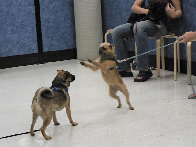 Monk Training Dogs