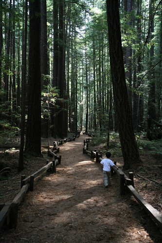 guerneville,  duncans mills,  armstrong red… IMG_2650