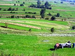 prairie, agriculture, farm, steppe, field, grass, plain, grazing, terrace, meadow, landscape, pasture, rural area, grassland, plantation,