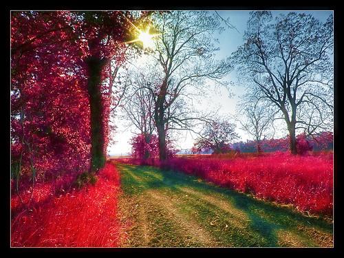 road rouge louisiana dirt baton