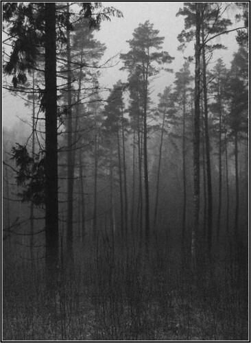 bw mist pine forest finland bosque niebla finlandia 1on1photooftheday laitmanintie