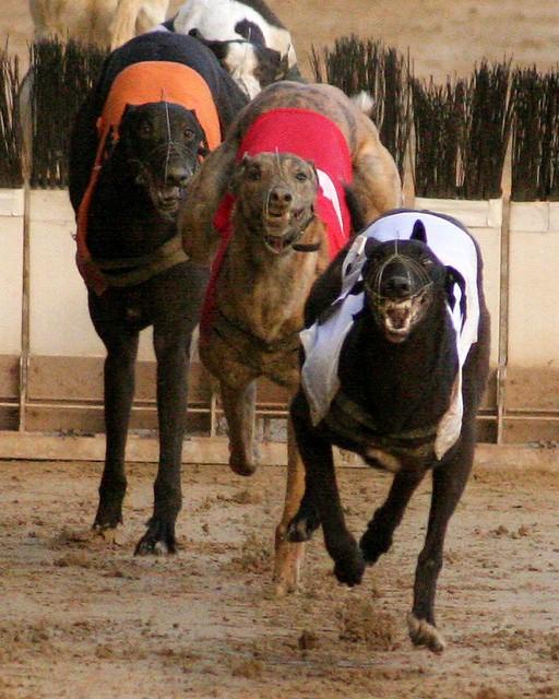Wimbledon Stadium Lights: Dog Racing At Wimbledon Stadium