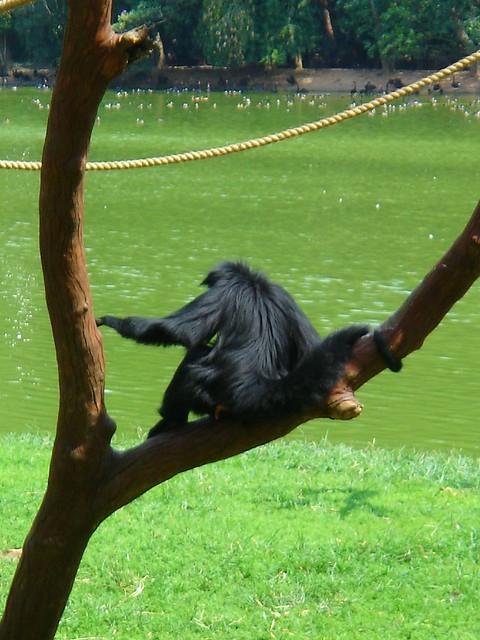 Photo:Monkey - 後ろ姿 #5 By Carol^-^