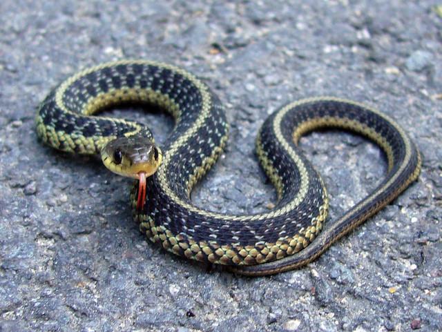 Snake Jr Flickr Photo Sharing