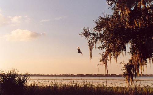 sunset bird florida myakkastatepark