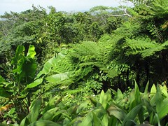 botanical garden, leaf, flora, green, forest, ostrich fern, ferns and horsetails, jungle, vegetation, plantation,