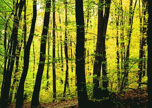 Autumn pattern I