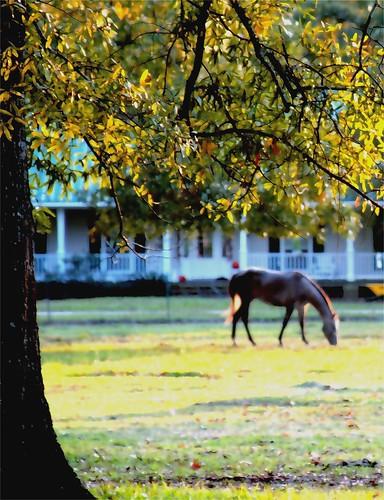 morning tree manipulated sunrise louisiana country thesouth neighborshouse horsefarm mrgreenjeans gaylon gaylonkeeling