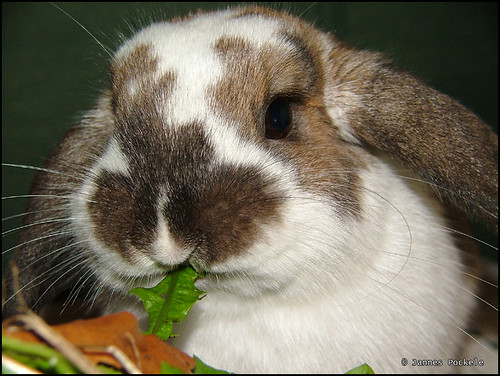 Knabbel eating