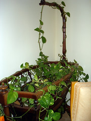 flower arranging(0.0), flower(0.0), branch(0.0), floristry(0.0), bonsai(0.0), flowerpot(1.0), floral design(1.0), plant(1.0), herb(1.0), houseplant(1.0), flora(1.0), green(1.0), produce(1.0),
