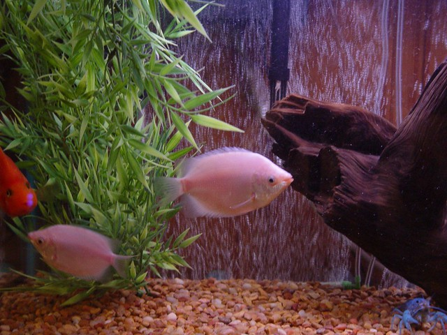 Our fish tank flickr photo sharing for Fish tank camera