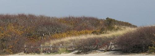 Dunes by ammodramus88