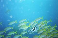 fish, coral reef fish, marine biology, underwater, shoal,