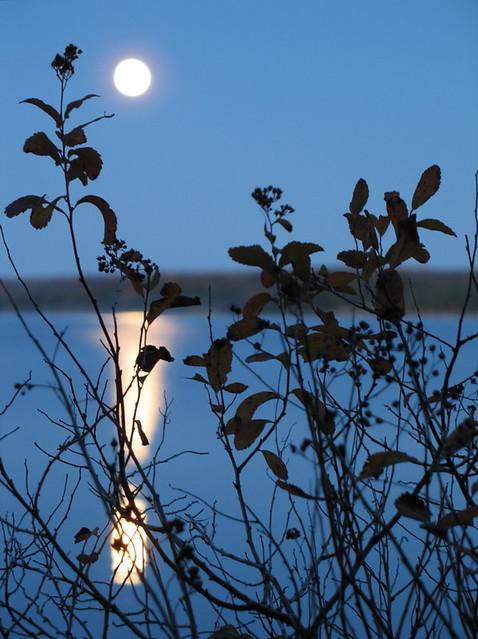 Moonrise (2)