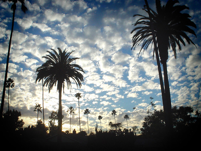 California Palms, Sony DSC-U40