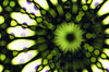 Two Camera Blurred Pictures of Opartica Op Art Blended - 4