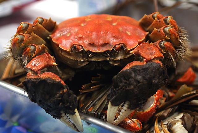 hairy crab | Flickr - Photo Sharing!