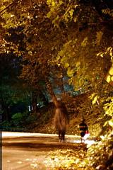 walking home    MG 3853