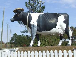 Savannah's Famous Cow