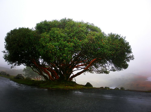 El arbol magico / The magical tree