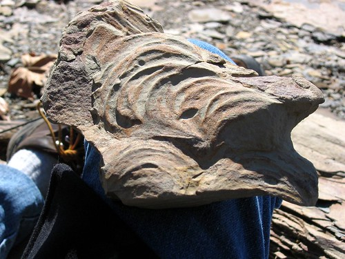 Fossil find (Zoophycus)