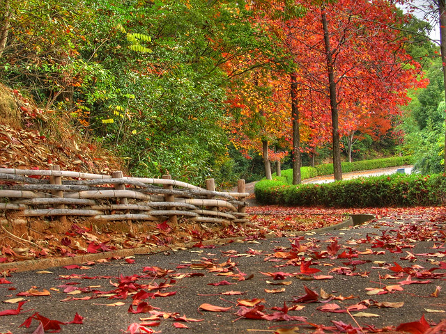 Photo:Winding ways of autumn (HDR) By EugeniusD80