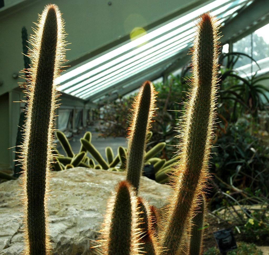 Cactus at Kew