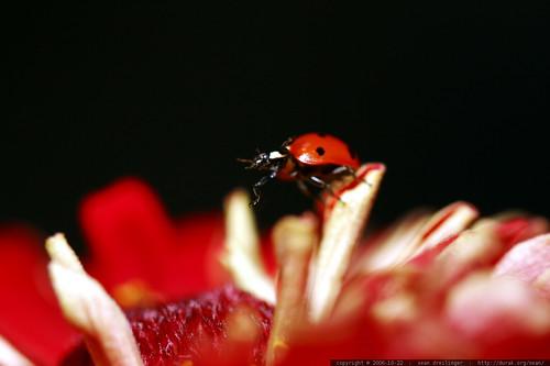 ladybug on top    MG 2744