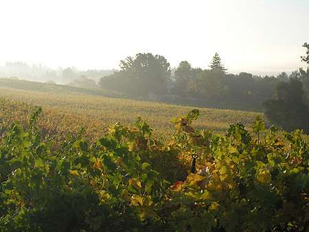 Russian River Valley More Click 5