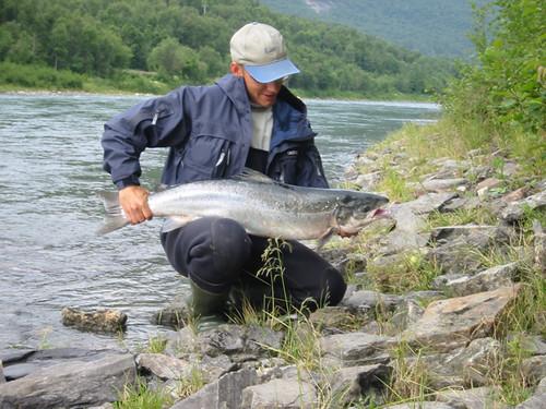 Lax (Salmon)