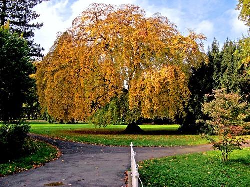 park city autumn sky tree leaves clouds colours vibrant oneofakind vivid indiansummer jpingjk