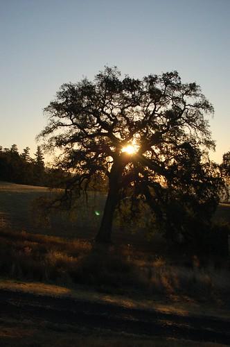 sunrise headlands mendocino yorkville vandammestatebeach