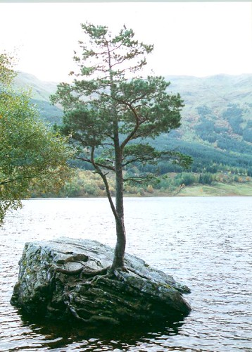 Loch Voil rock tree by shantavira
