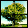 Tree Quadtych by Pete Ashton