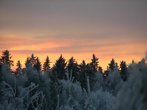 november trees sky nature yellow suomi finland evening frost gray oulu ilta luonto puut taivas harmaa keltainen kuivasjärvi marraskuu abigfave huurrepuut anawesomeshot