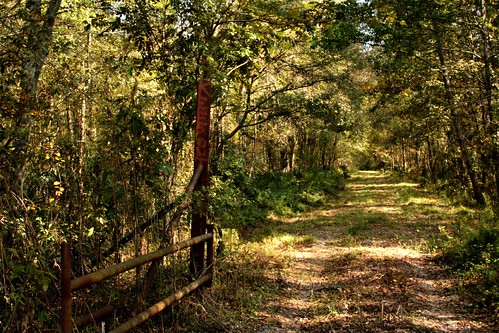 trees nature mrgreenjeans gaylon mosquitoinfested louisianawoods constructionroad goteatenalive gaylonkeeling