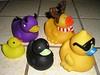 250px-Five_different_rubber_ducks