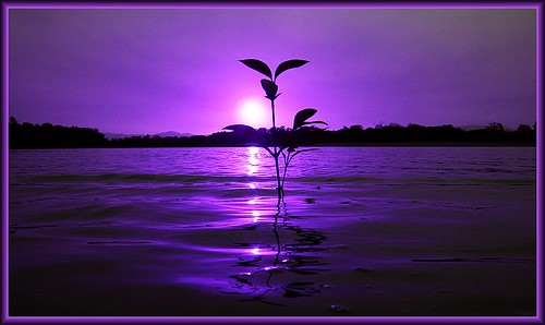 Purple sunset by beachut (John Sheil)