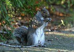 Squirrel_20061124_028