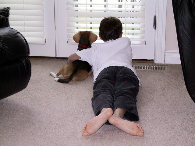 Header of A Boy and His Dog